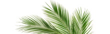 Banner Tropical Green Palm Leaves , Branches Pattern Frame On A White Background. Top View.copy Space.abstract.