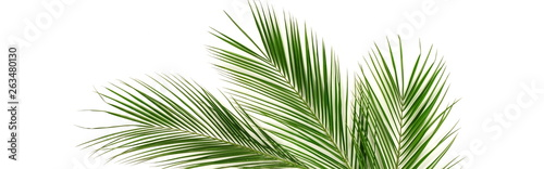 Fotomural  Banner tropical green palm leaves , branches pattern frame on a white background