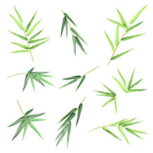 Bamboo Leaves. Set Of Hand Dra...
