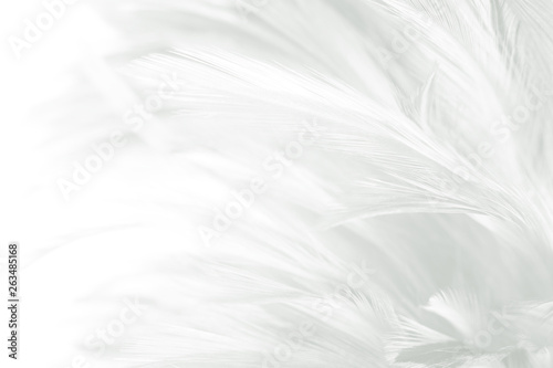 Photo sur Aluminium Aigle Beautiful white feather pattern texture background