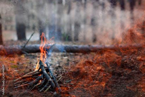 Valokuvatapetti Forest fire