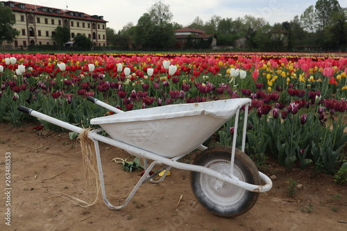Fotografía  wheelbarrow with flowers