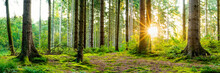 Wonderful Forest Panorama In Spring With Bright Sun Shining Through The Trees