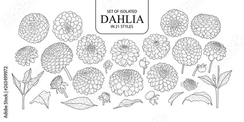 Set of isolated Dahlia in 21 styles. Fototapeta