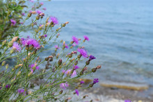 Purple Flowers And Water