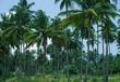 topsch,palmenwald