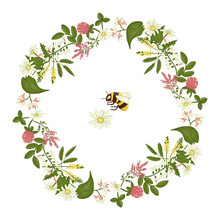 Vector Wreath Of Acacia, Heather, Camomile, Buckwheat, Clover, Melilot, Bumblebee. Hand Drawn Cartoon Style Illustration. Cute Frame With Wild Flowers For Natural Or Card Design
