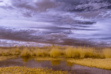 The Great Dismal Swamp In Virginia With A Dramatic Surreal Sky, Photographed In Infrared