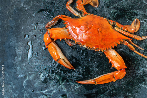 isolated steamed whole blue crab on wet marble background flat lay Canvas Print