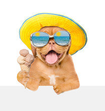 Dog  In Mirrored Sunglasses And Summer Hat Holding Ice Cream And Peeking Above White Banner. Isolated On White Background