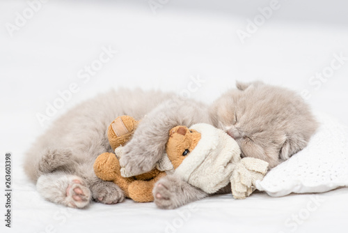 Baby kitten sleeping with toy bear on pillow
