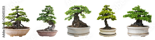 Montage in der Fensternische Bonsai Bonsai trees isolated on white background. Its shrub is grown in a pot or ornamental tree in the garden.