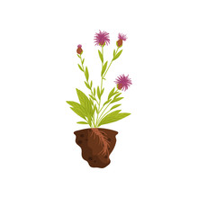 Plant With Purple Flowers On T...