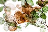 suche kwiaty z bliska w szczegółach na białym tle - 263625367