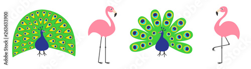 Peacock Pink flamingo set line. Feather out open tail. Exotic tropical bird. Zoo animal collection. Cute cartoon character. Decoration element. Flat design. White background. Isolated.