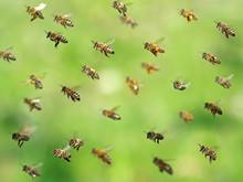 Macro Shot Of Flying Bee Swarm...