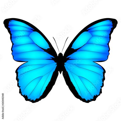 Obraz na plátně  Blue Butterfly