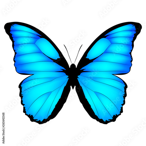Blue Butterfly Canvas-taulu