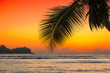 Beautiful orange sunset over the sea with coco palm on the beach in Jamaica Caribbean island