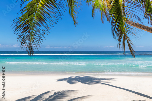 Obraz Paradise beach with white sand and coco palms. Summer vacation and tropical beach concept.   - fototapety do salonu