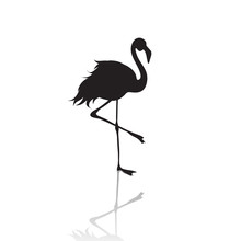 Vector Silhouette Of Flamingo On White Background.Symbol Of Animal And Nature.