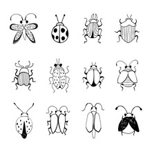 Hand Drawn Insect Sketch. Desi...