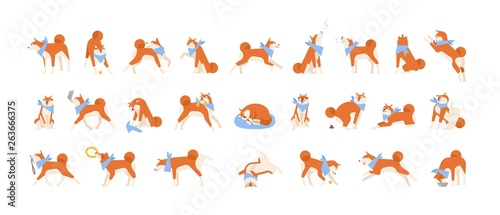 Tableau sur Toile Collection of Akita Inu performing daily activities