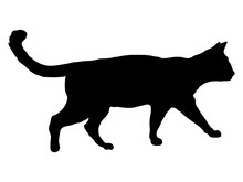 Cat Black Silhouette