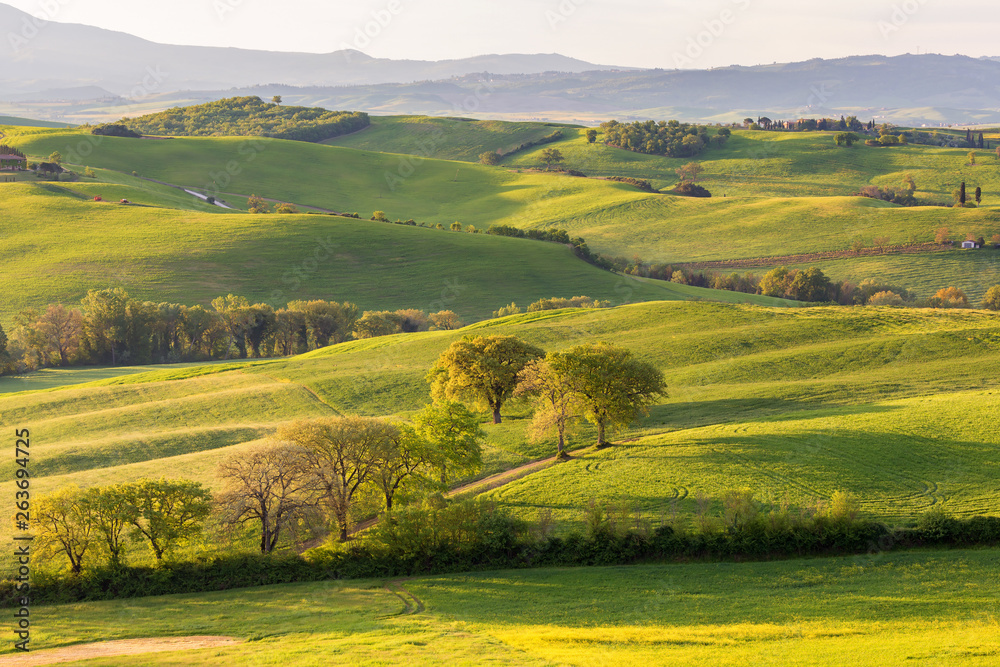 Fototapety, obrazy: Rolling Landscape with hills and fields in Tuscany