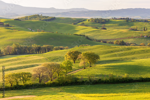 Poster Miel Rolling Landscape with hills and fields in Tuscany