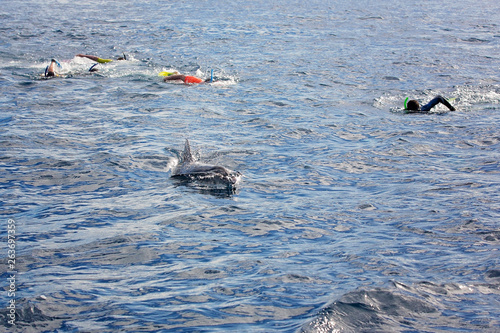 Fotografie, Obraz  People, snorkeling in the open ocean, swimming with dolphins