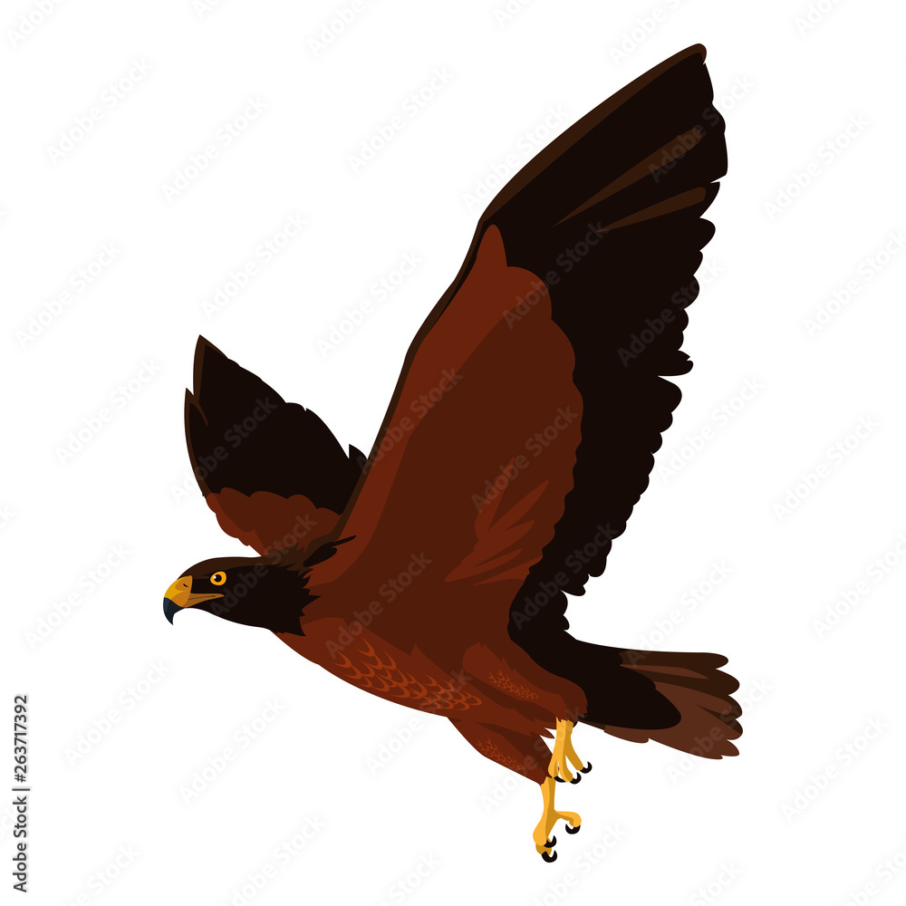 Fototapeta beautiful eagle flying majestic bird