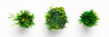 Artificial Grassy Plants In Po...