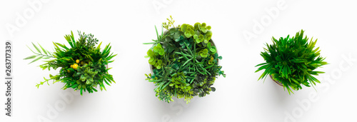 Photo Stands Plant Artificial grassy plants in pots on white background