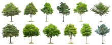 The Collection Of Trees Isolat...