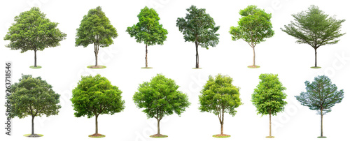 Foto auf Leinwand Baume The collection of trees isolated on white background. Beautiful and robust trees are growing in the forest, garden or park.