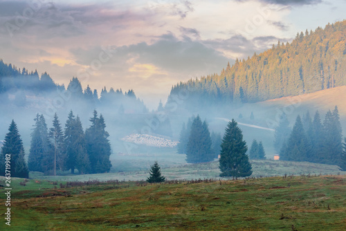 Poster Morning with fog gorgeous sunrise in romanian mountains. foggy countryside autumn scenery. spruce trees on the meadow. flock of sheep in the distance. light touches the top of a forested hill