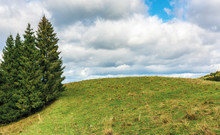 Spruce Trees On The Edge Of A ...