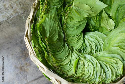 betel leaf Canvas Print