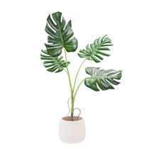 Decorative Monstera Tree Planted White Ceramic Pot Isolated On White Background. 3D Rendering, Illustration.
