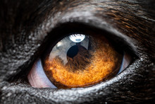 An Extreme Macro Closeup Of A ...