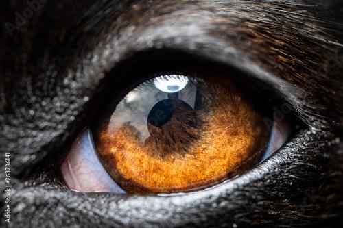 Foto  An extreme macro closeup of a greyhound dog eye