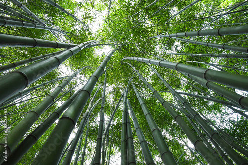 Printed kitchen splashbacks Bamboo Bamboo forest. No people