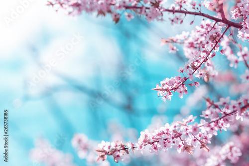 streszczenie-kwiat-wisni