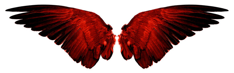 red wings isolated on a white