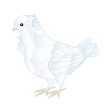 Small Bird Cute  Ornamental Wh...