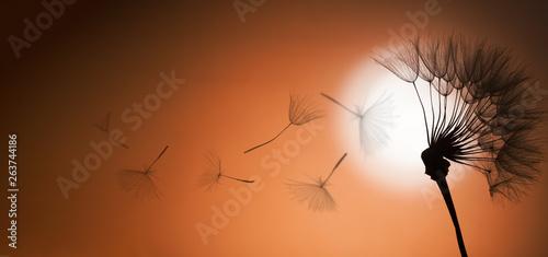 flying dandelion seeds on a sunset background