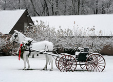 Horse And Carriage Outside In Snow