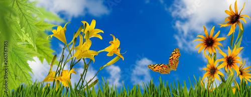 Aluminium Prints Garden image of flowers and butterflies in the garden