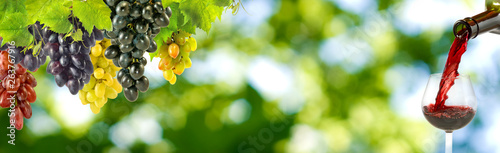 Poster de jardin Bar image of grapes and glasses with wine on a green background